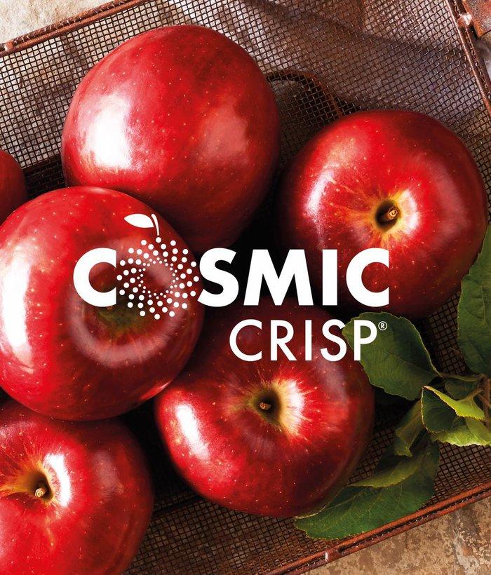 csmic
